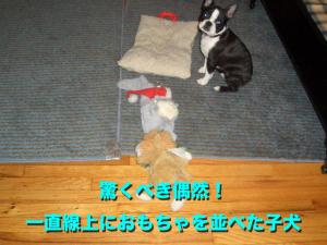 驚くべき偶然! 一直線上におもちゃを並べた子犬