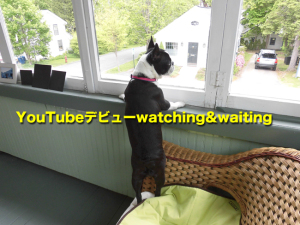 YouTubeデビューwatching&waiting