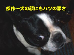 傑作〜犬の顔にもバツの悪さ