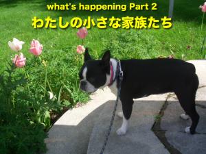 what's happening Part 2 わたしの小さな家族たち