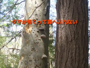 クマが怖くって森へ入れない