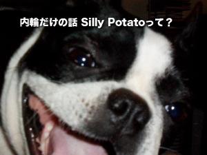 内輪だけの話 Silly Potatoって?