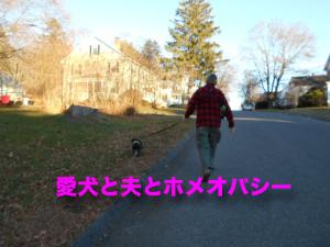 愛犬と夫とホメオパシー