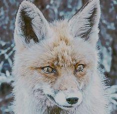 狐につままれた!?